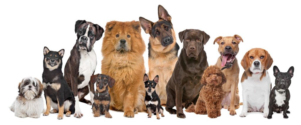 tienda-de-mascotas: Razas de Perro