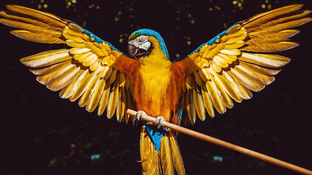 tipos de pájaros y aves exóticas