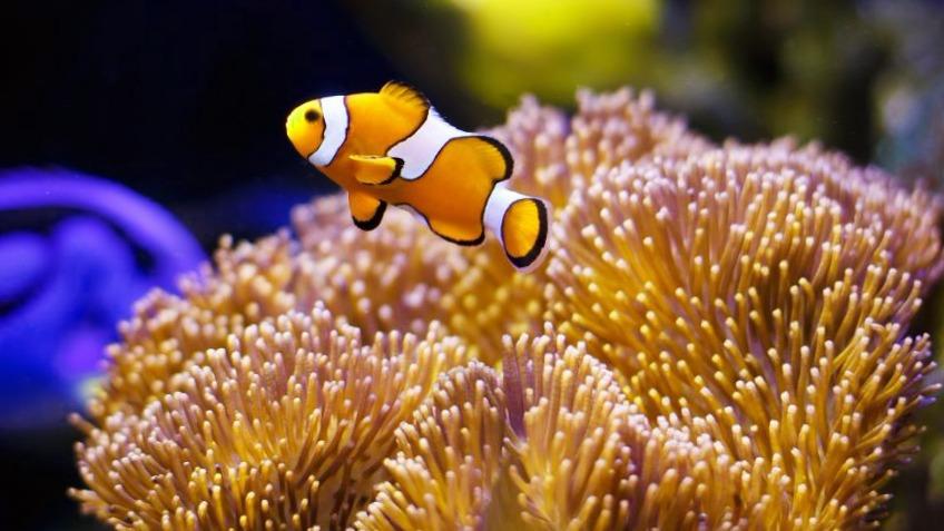 peces-de-agua-salada