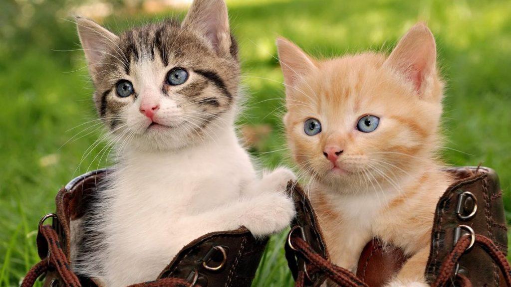 civilizaciones-antiguas-y-los-felinos-razas-de-gato