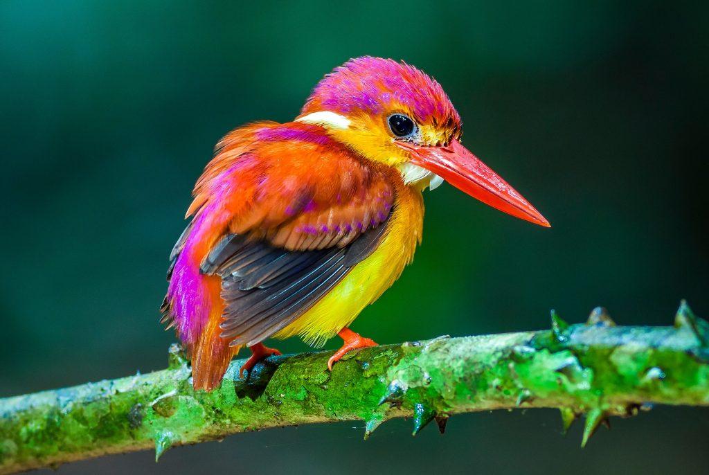 razas de pájaros y aves exóticas