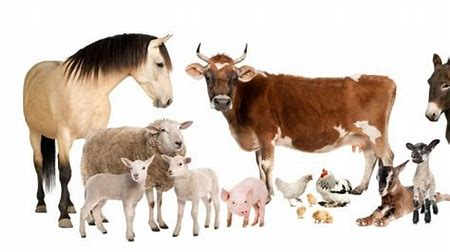 Razas de Otros Animales