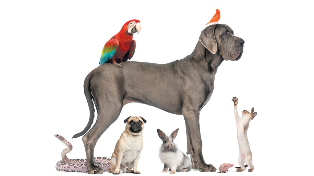 razas-de-mascotas-y-razas-de-animales-etnias