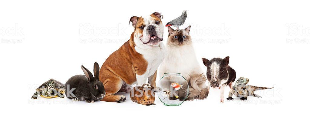 mascotas-tipos-de-mascotas