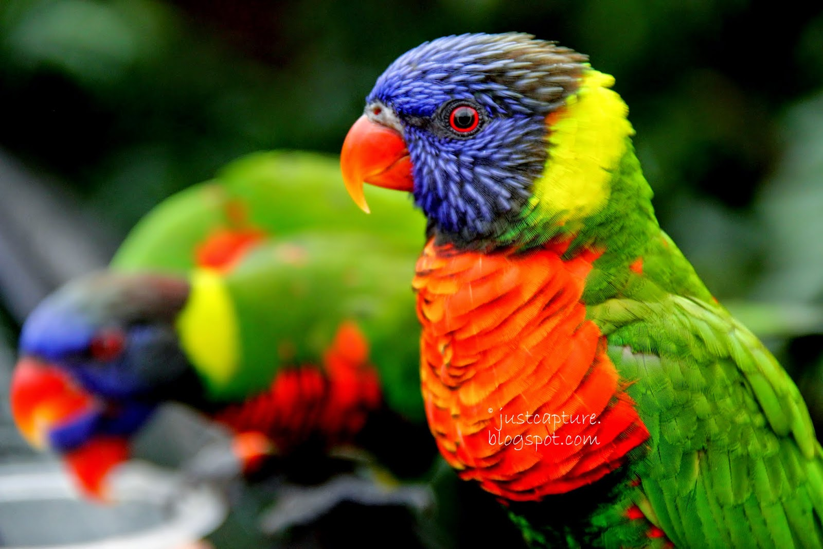 tienda-de-mascotas-Pájaros