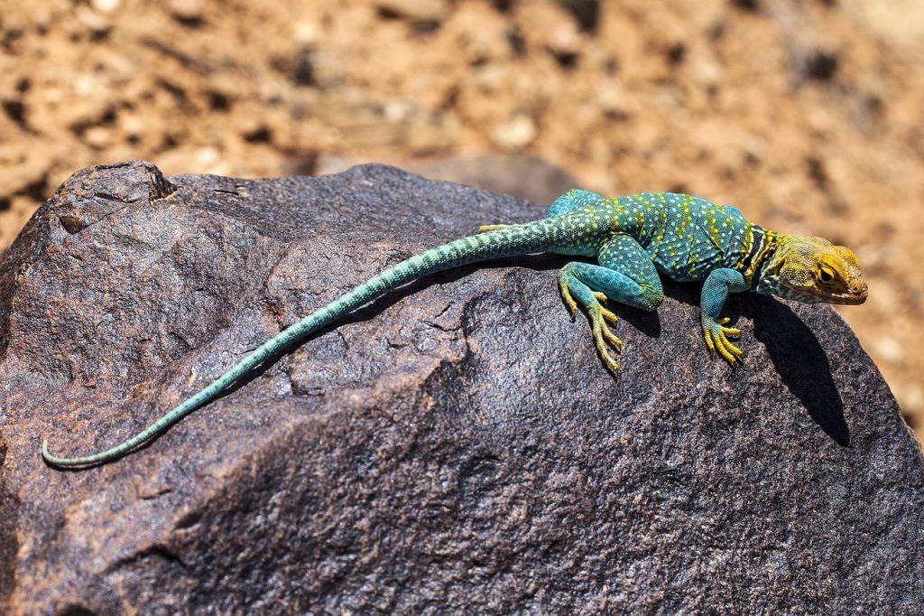 razas de reptiles