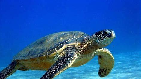 tortuga-marina-tipos-de-tortugas