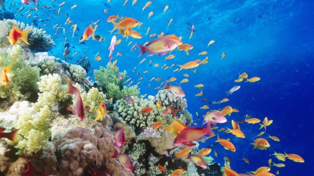 historia-y-cronología-de-los-tipos-de-peces