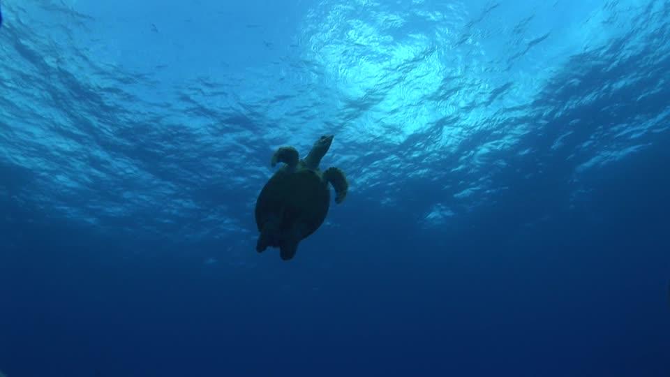 tortugas-de-agua-tortugas-de-mar