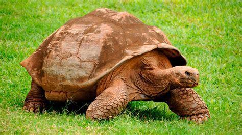 tipos-de-tortugas