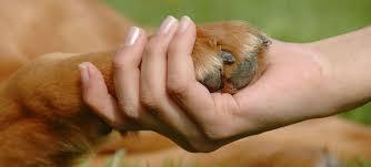 Antes de adoptar un animal