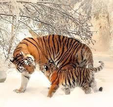 animales-bonitos