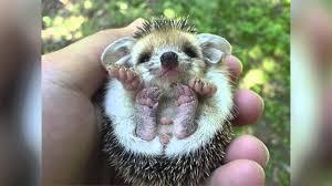 animales-bonitos-bebés