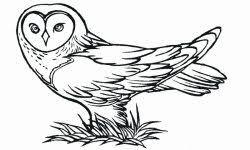animales-bonitos-para-dibujar