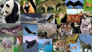 animales-en-peligro-de-extinción