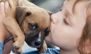 antes-de-adoptar-un-animal-mascota-