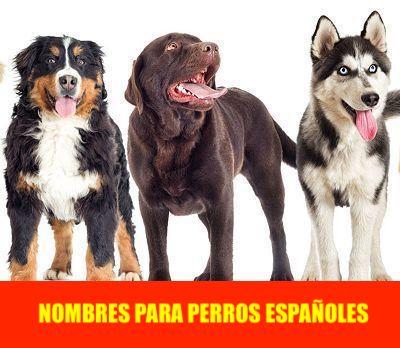 NOMBRES DE PERROS ESPAÑOLES