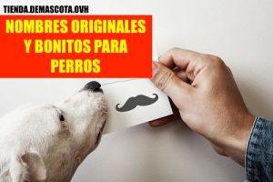 NOMBRES ORIGINALES Y BONITOS PARA PERROS