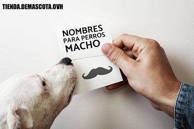 nombres de perros machos